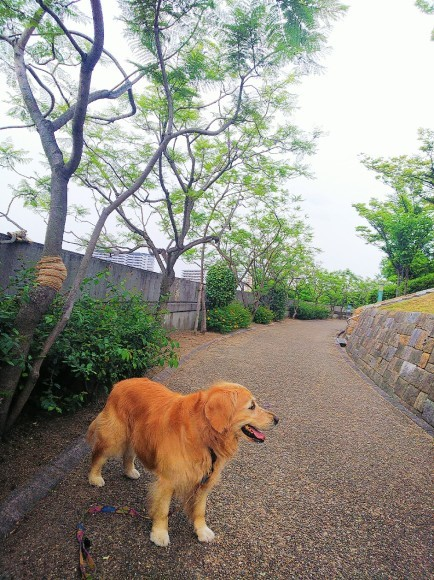 八幡屋公園_a0098418_17133405.jpg