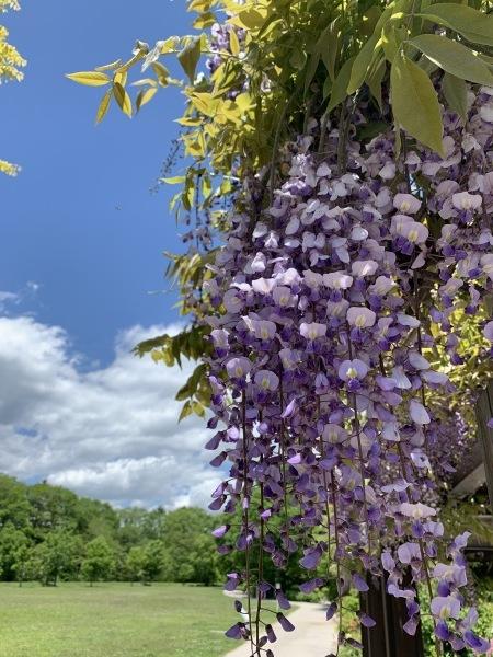 軽井沢の初夏を体感しました><_d0035921_18573825.jpg