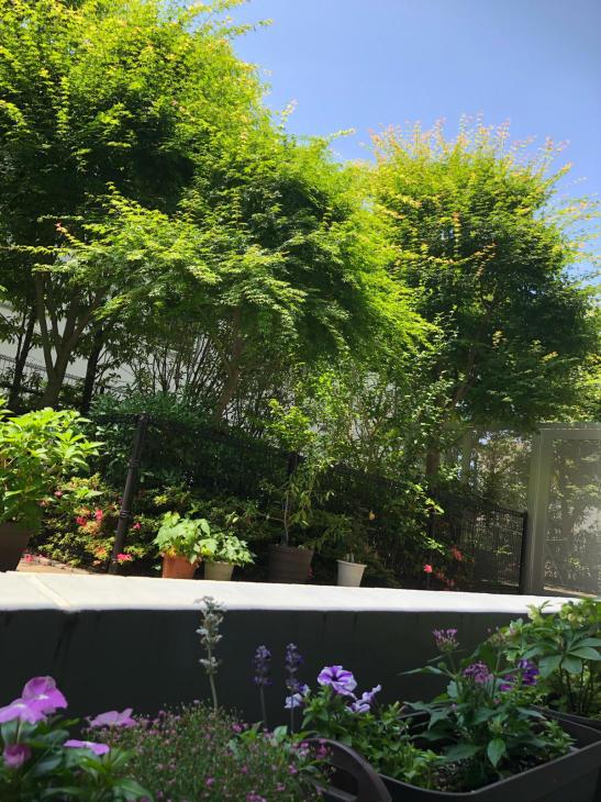 お庭で森林浴_c0190424_13052144.jpg