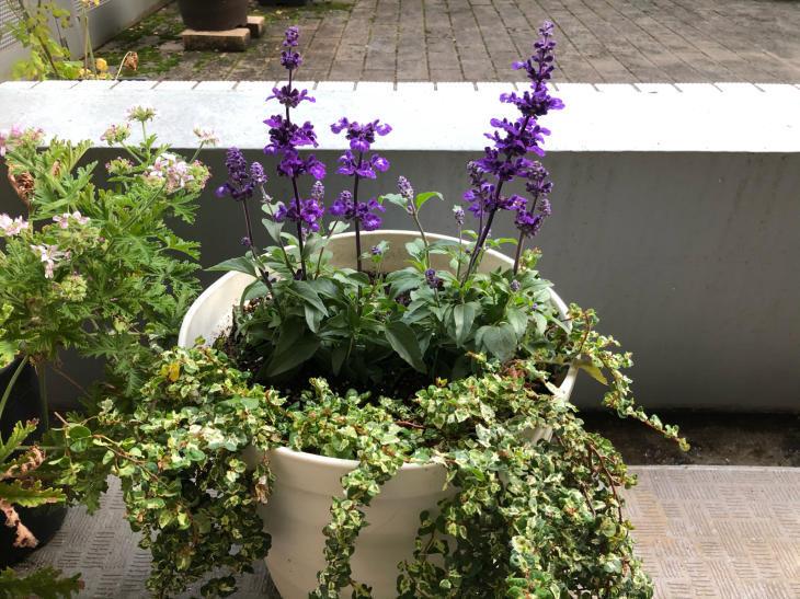 お庭で森林浴_c0190424_13052574.jpg