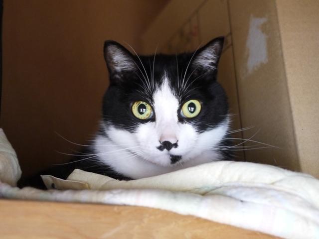 猫のお留守番 にこくん編。_a0143140_21133710.jpg
