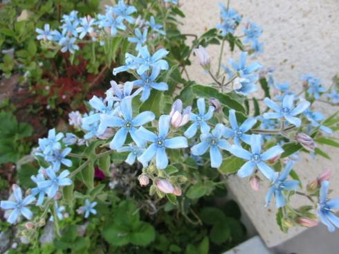 6月の庭_e0002850_14463373.jpg