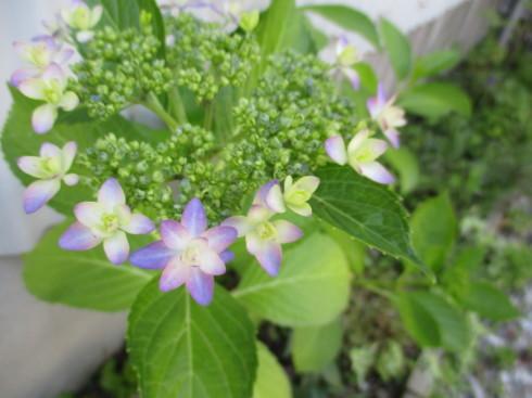 6月の庭_e0002850_14472390.jpg