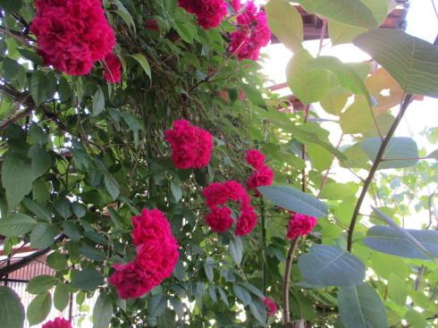 6月の庭_e0002850_14483400.jpg