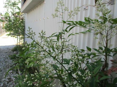 6月の庭_e0002850_14491128.jpg