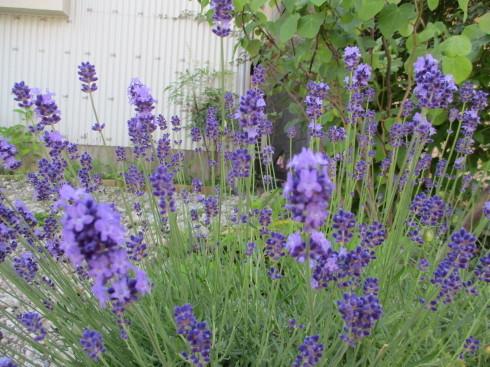 6月の庭_e0002850_14492851.jpg