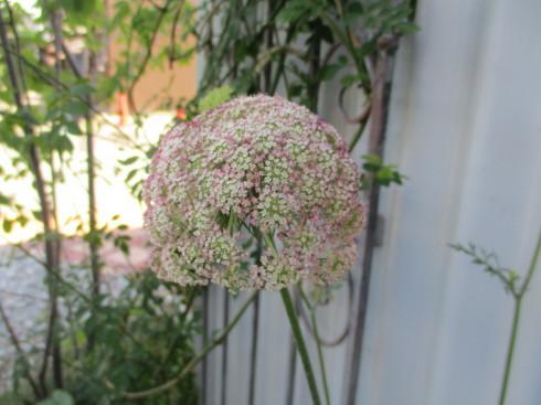 6月の庭_e0002850_14494368.jpg