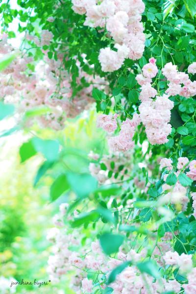 優しい色_e0268051_11195927.jpg