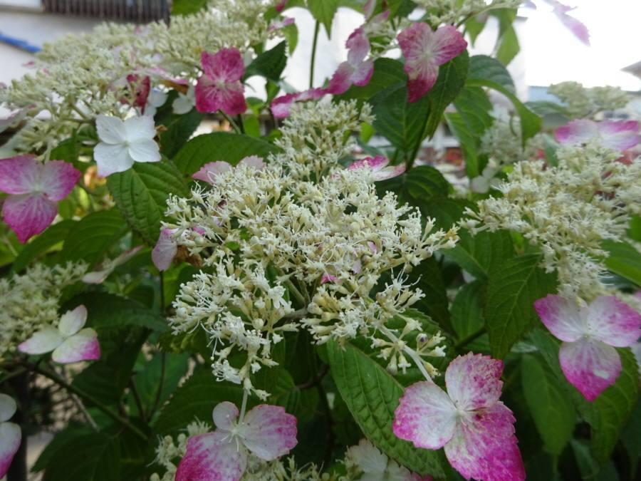 庭の花 夏その1_f0059673_17223119.jpg
