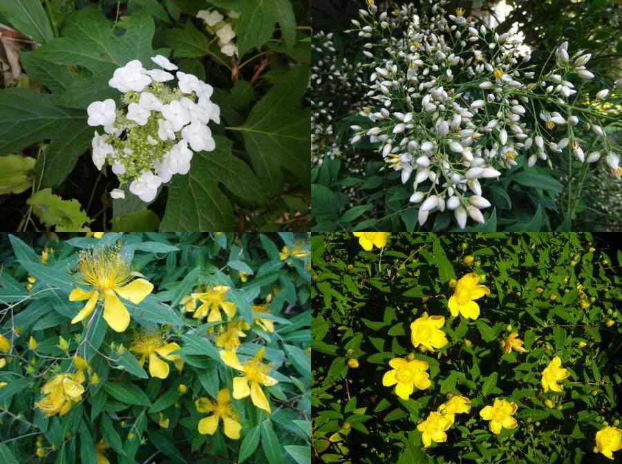 庭の花 夏その1_f0059673_17224865.jpg