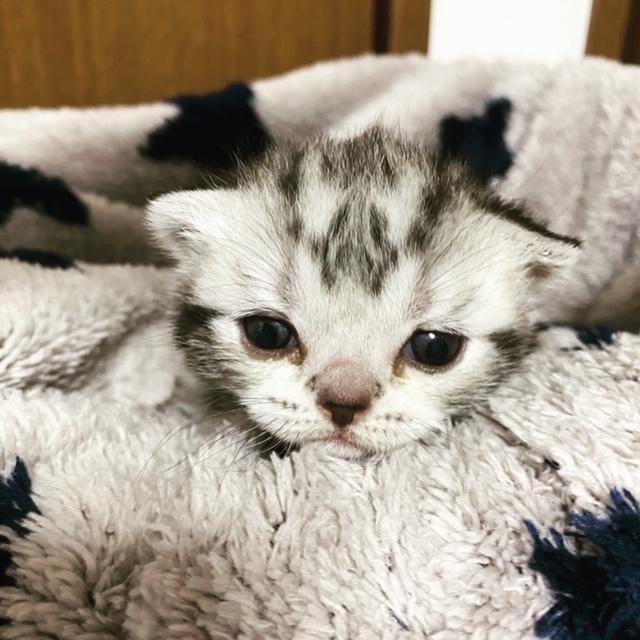 子猫生まれてます♪_c0105086_23203665.jpg