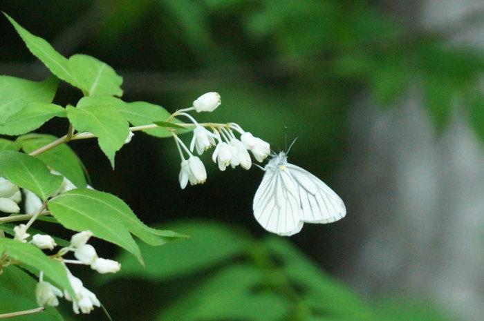 花と蝶_d0162994_07284935.jpg