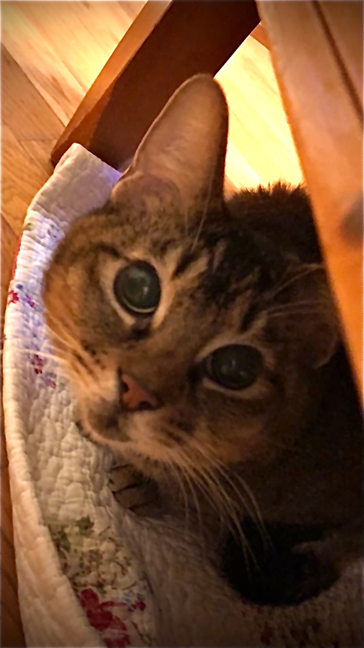 愛猫ココが…_f0061797_00173694.jpg