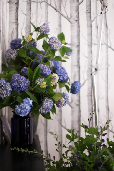 紫陽花の季節です_b0208604_23133915.jpg