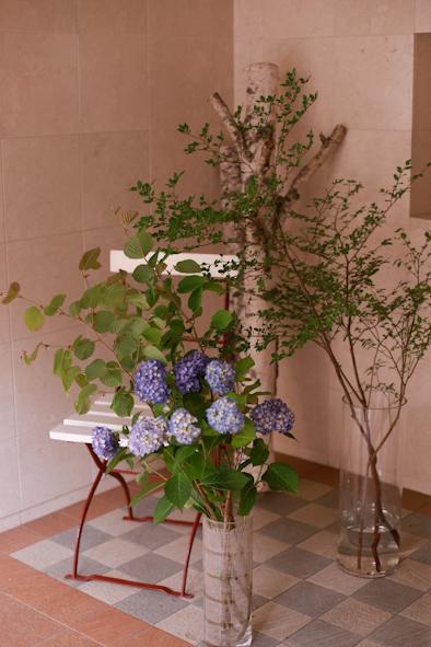 紫陽花の季節です_b0208604_23171387.jpg