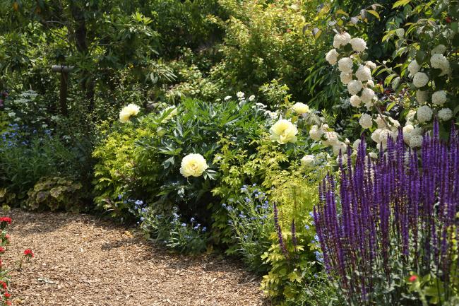 中之条ガーデンズ2020 #1 シンボルツリーのローズガーデン _a0357206_20325617.jpg