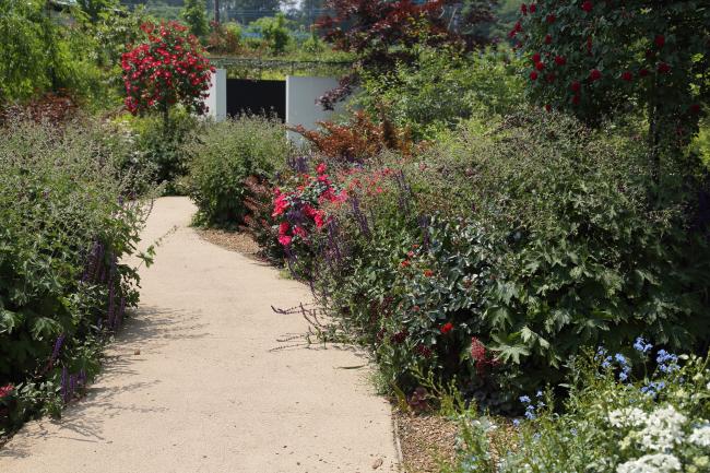 中之条ガーデンズ2020 #1 シンボルツリーのローズガーデン _a0357206_20341586.jpg