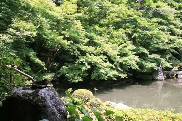 蓮華寺 緑に染まる_e0048413_21134216.jpg