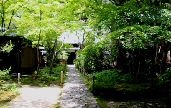 蓮華寺 緑に染まる_e0048413_21140664.jpg