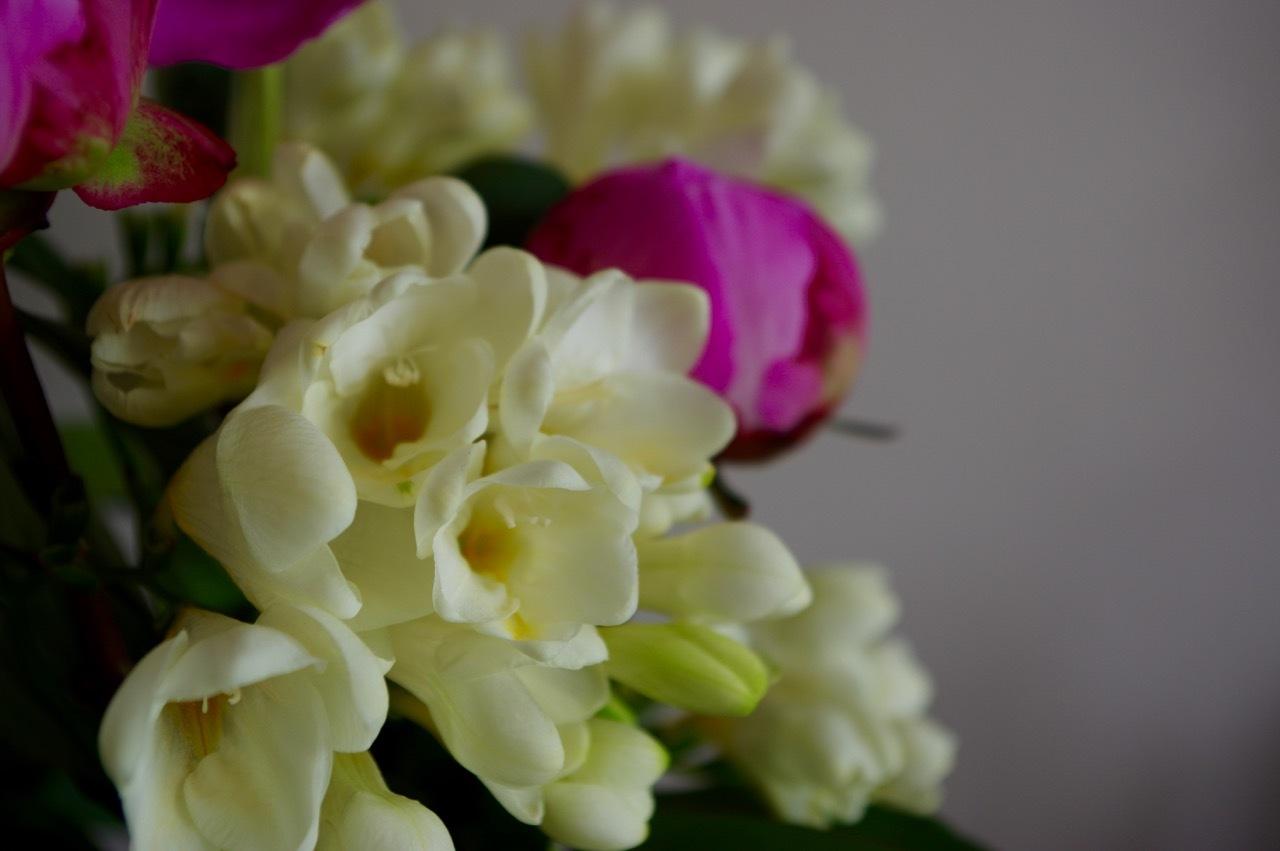 心にしみる芍薬の花_e0114020_19345214.jpg