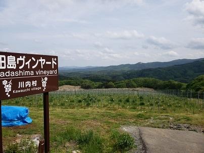 かわうちワイン・高田島ヴィンヤード_d0003224_09285409.jpg