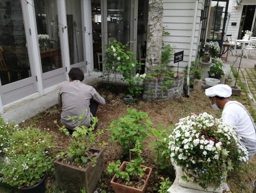 植物を育ててみよう!_d0331029_18530948.jpg