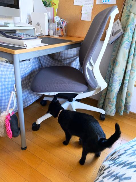 新しい椅子がやってきた_d0355333_22093385.jpg