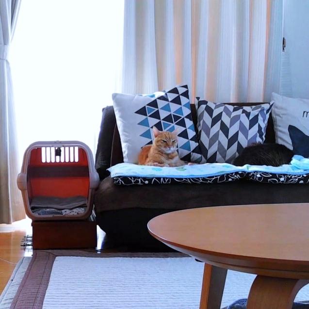 新しい椅子がやってきた_d0355333_22102526.jpg