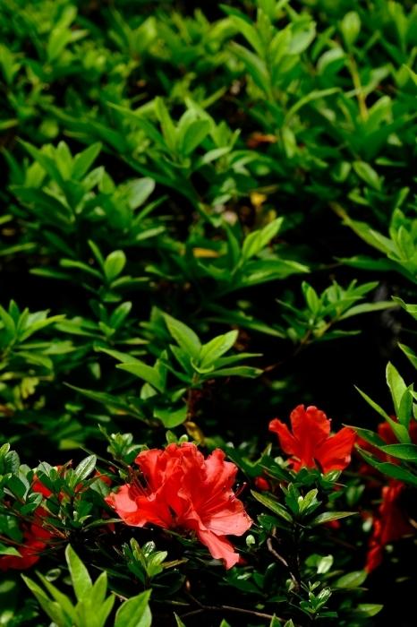 Photo エクササイズ FUJIFILM X-T4+FUJINON16-80mm_f0050534_15453437.jpg