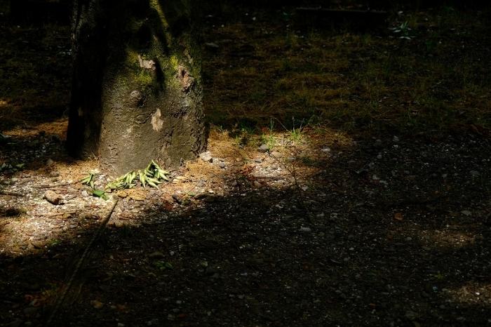 Photo エクササイズ FUJIFILM X-T4+FUJINON16-80mm_f0050534_15453477.jpg