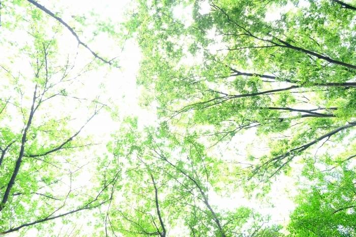 Photo エクササイズ FUJIFILM X-T4+FUJINON16-80mm_f0050534_15454761.jpg