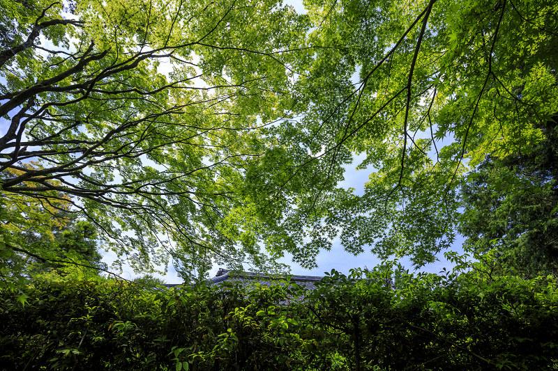 新緑まぶしい桂春院_f0155048_23555425.jpg