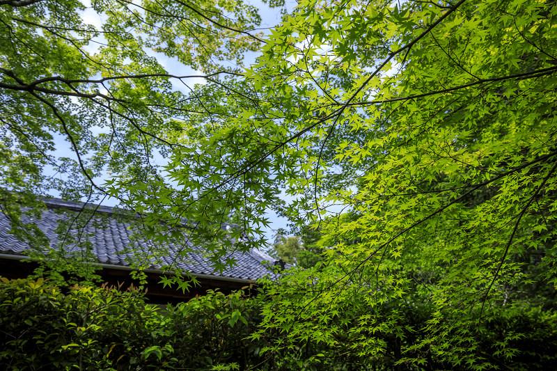 新緑まぶしい桂春院_f0155048_2356725.jpg