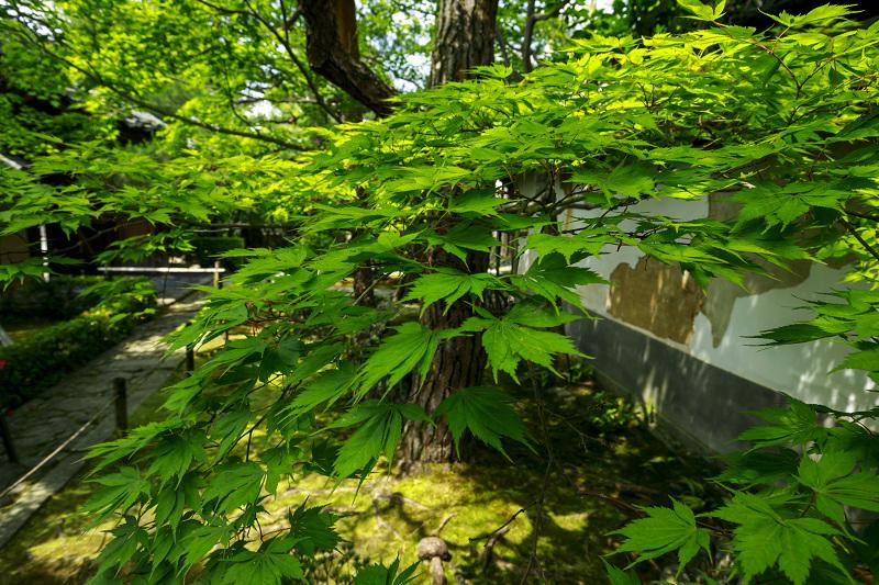 新緑まぶしい桂春院_f0155048_2357724.jpg