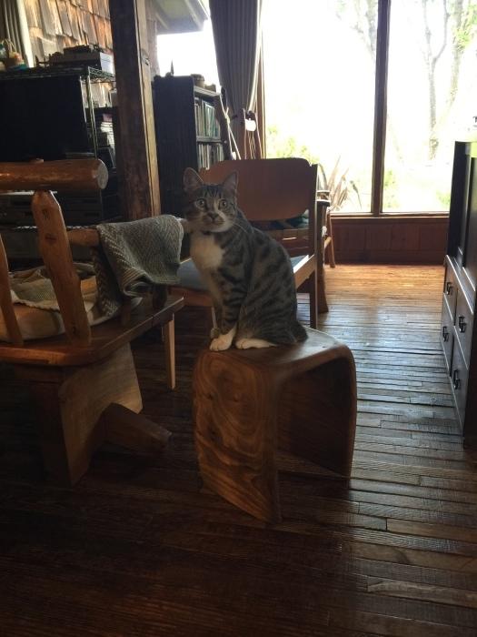 桜の椅子_e0091670_22495375.jpeg