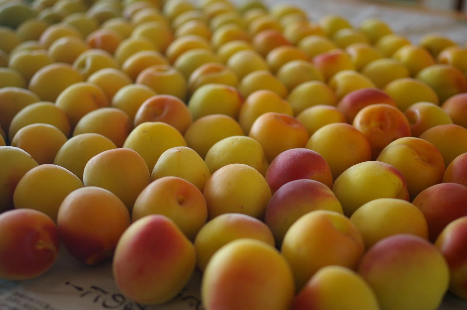 完熟梅を塩漬けに_d0327373_10582068.jpg