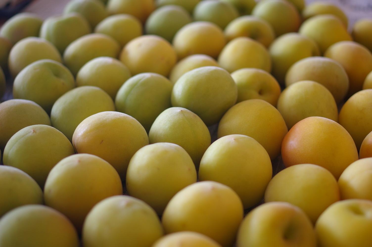完熟梅を塩漬けに_d0327373_10583247.jpg