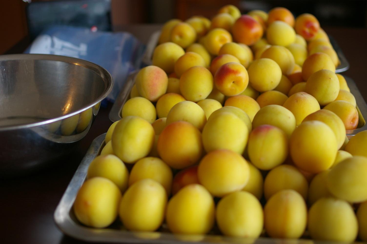完熟梅を塩漬けに_d0327373_10590529.jpg