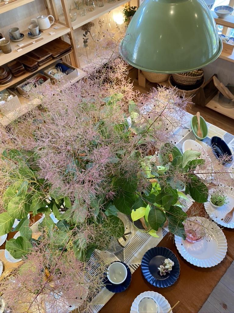 テーブルのスモークツリーと庭のサツキ_c0334574_20030063.jpeg