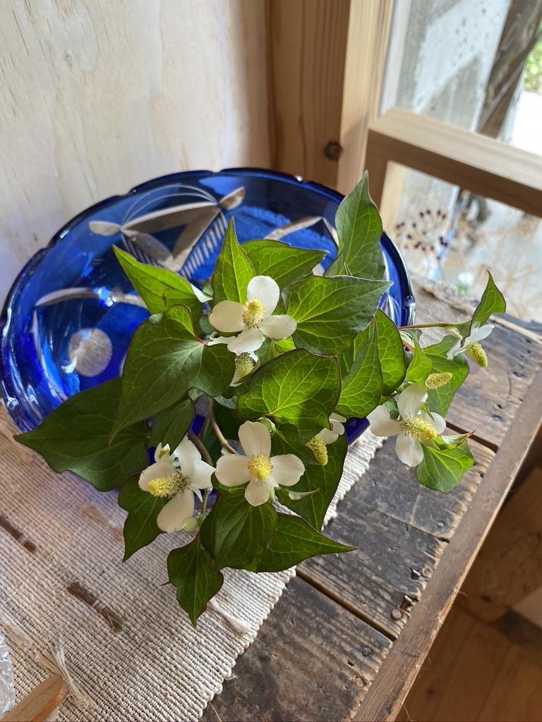 テーブルのスモークツリーと庭のサツキ_c0334574_20105914.jpeg