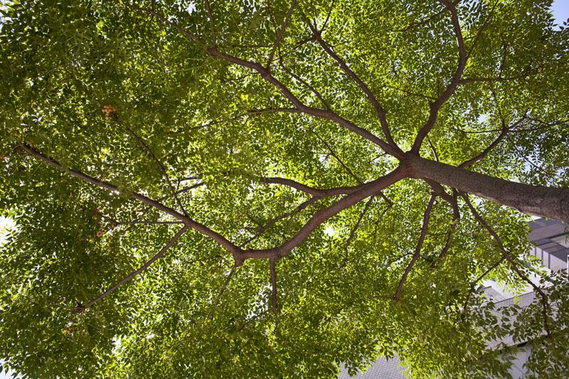 この木何の木、気になる木_c0131875_21362431.jpg