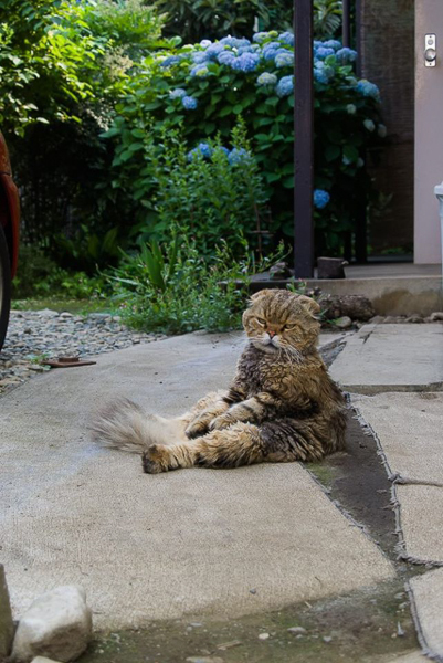 番猫はここにいる_f0239100_14464730.jpg