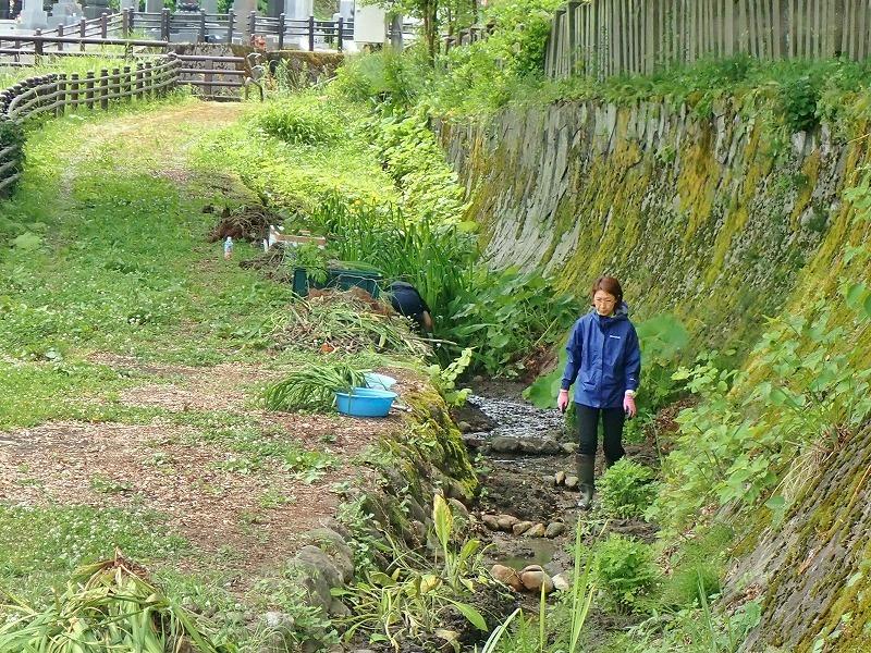 毘沙門堂の石垣脇の水路へ水芭蕉などを移植しました_c0336902_16141150.jpg