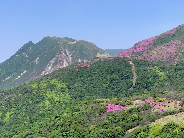 くじゅう連山のミヤマキリシマ♪_d0177220_11420342.jpg