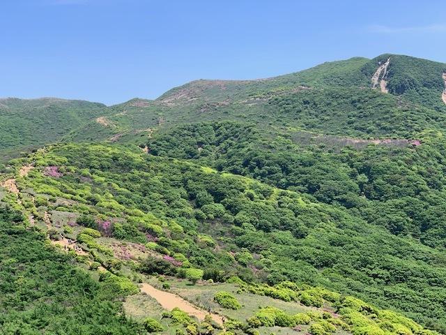 くじゅう連山のミヤマキリシマ♪_d0177220_11420382.jpg