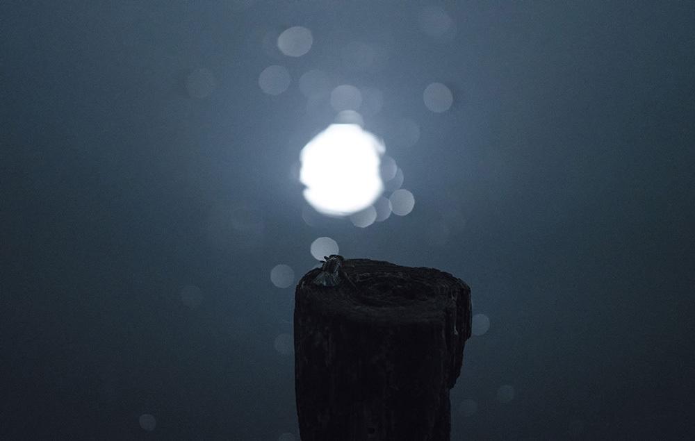 ウチワヤンマ 羽化-3 満月の翌日_f0324026_06273240.jpg