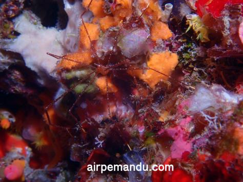 6月8日万座ダイビング&サンゴの産卵リベンジ_c0070933_21513330.jpg