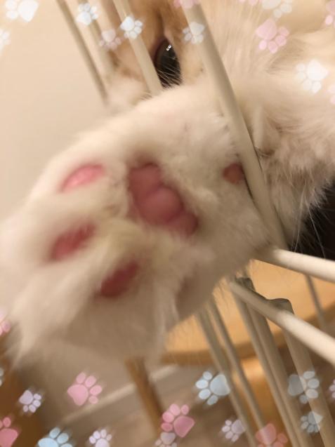 仔猫を迎えて_e0379544_16450227.jpg