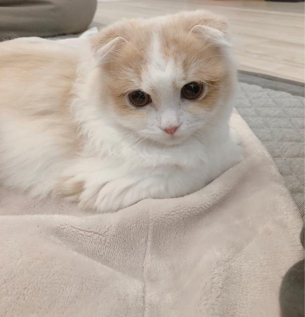 仔猫を迎えて_e0379544_17444702.jpg
