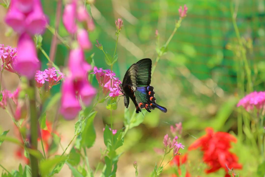 花と蝶_e0403850_20470933.jpg